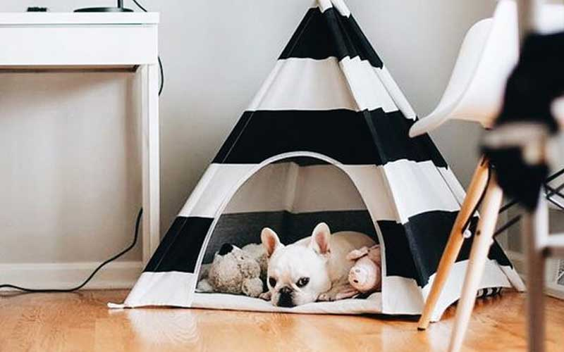 Pet Teepee, accomodating your pets with style