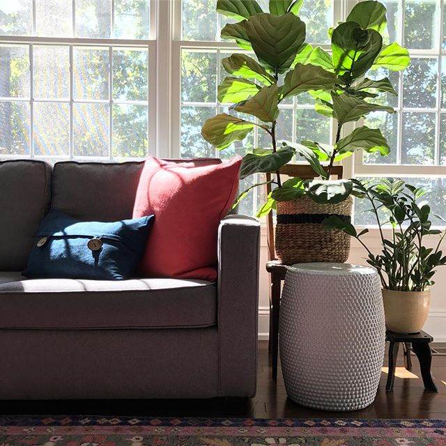 House Plants Bringing More Green Into Your Home S Interior Design Down2earth Interior Design