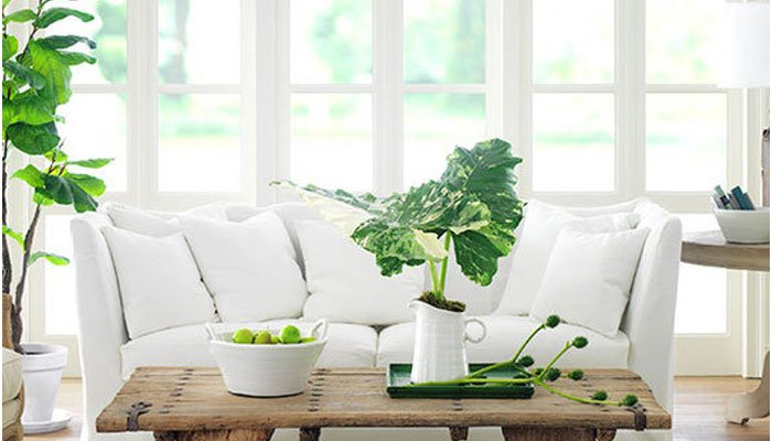 House plants bringing more green into your home s for Interior design plants inside house
