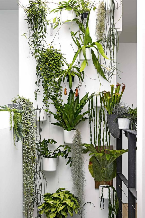 House Plants Interior Design   Down2Earth Interior Design