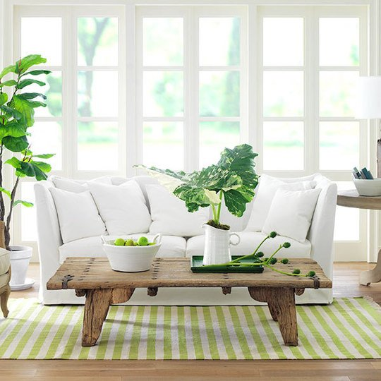 House Plants: Bringing more Green into your home\'s interior design ...