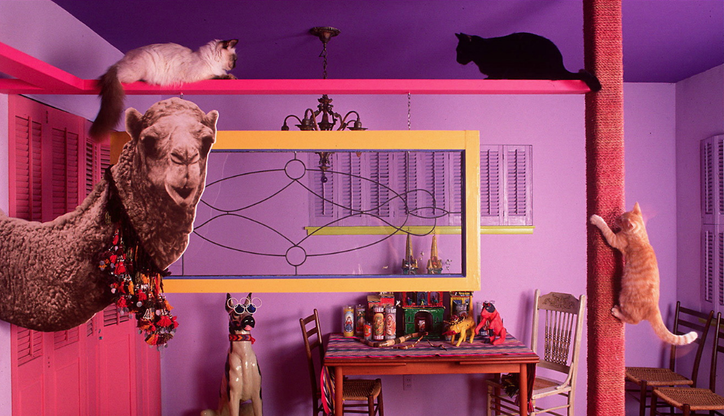 interior design for cats